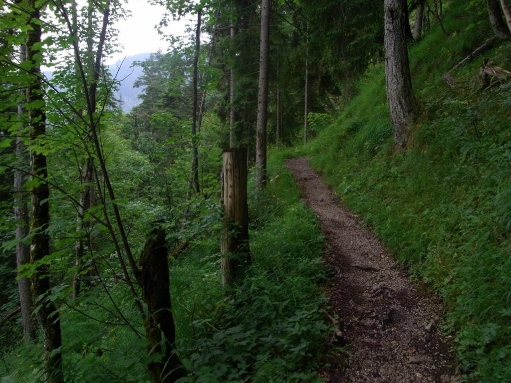Auf schmalem Pfad durch den Wald