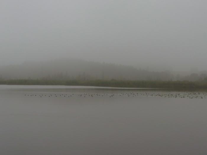 Der Maisinger See liegt auch im Nebel.