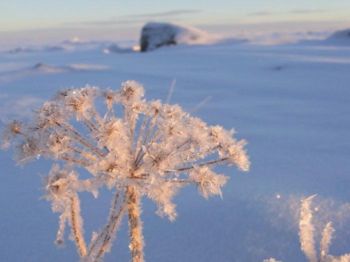 Eisblumen auf der Ostsee