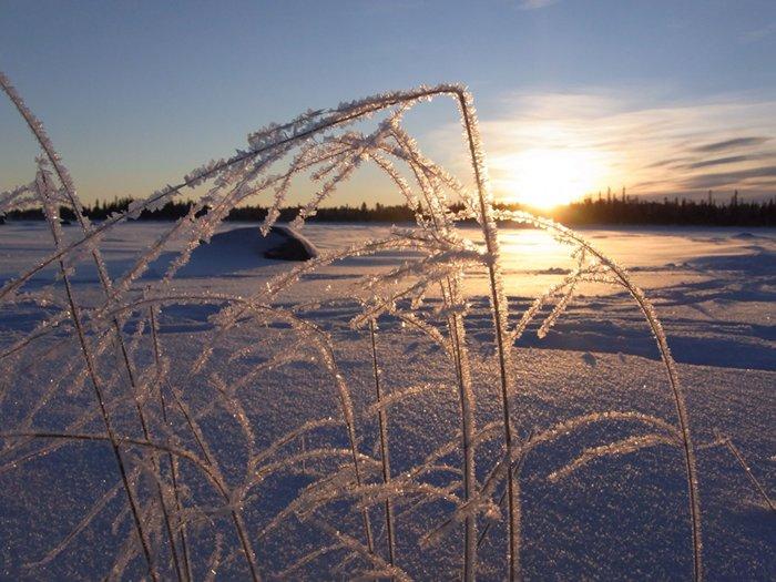 Die vereisten Gräser funkeln in der schwedischen Wintersonne