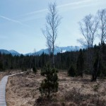 Wanderung durchs Murnauer Moos im Frühling