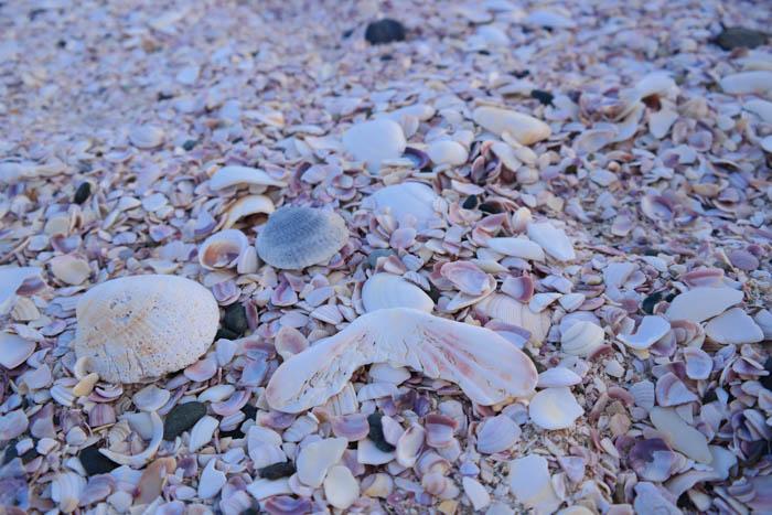 Muschelstrand am Strand von Matauri Bay