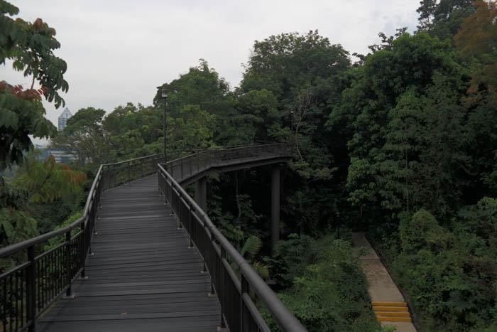 Auf dem Canopy Trail