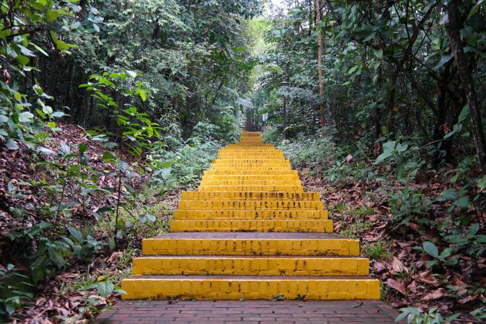 Über gelbe Treppen durch den Kent Ridge Park