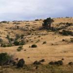 [Foto der Woche] #10 Keine Zeit für Central Otago, Neuseeland