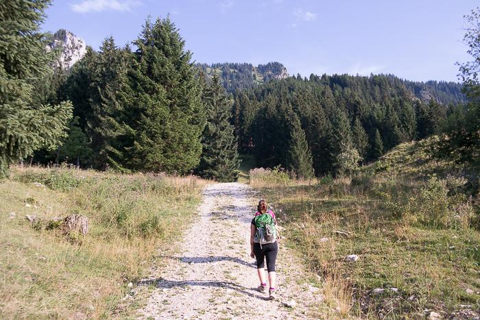 Der Anfang der Wanderung auf dem Forstweg
