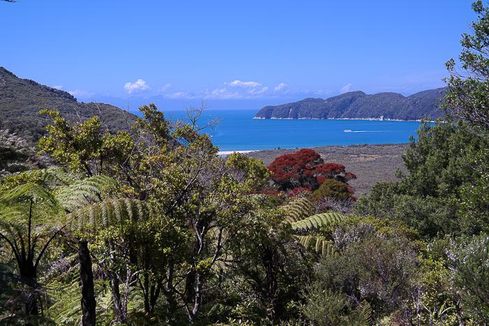 Neuseeländischer Weihnachtsbaum auf dem Tasman Coastal Walk