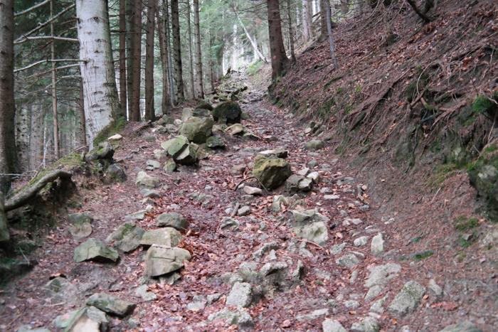 Waldweg zum Heigelkopf