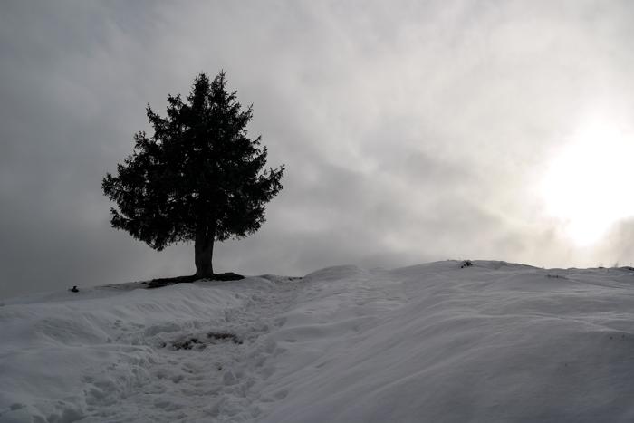 Auf dem Weg zum Zwiesel mit Baum und Sonne
